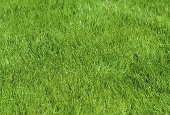 Hydroseeded lawns usually establish faster than hand-seeded lawns.