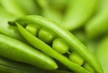 Peas are one of the earliest spring vegetable crops.