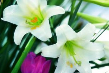 White Easter lilies contrast beautifully with colorful flowers.