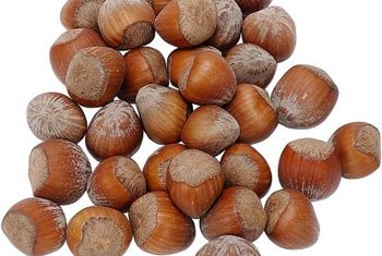 Germinate hazelnuts at home to grow your own trees.