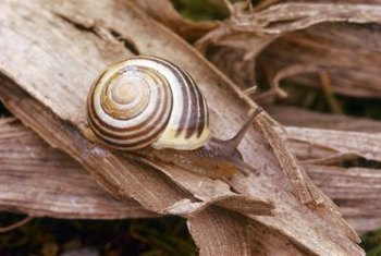 Snails have a wide diet, leaving damage behind.