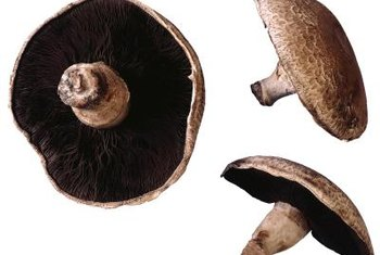 Mushrooms grown from plugs make take a year or more to mature.