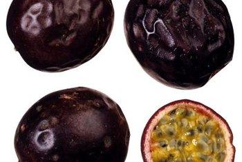 Purple passion fruits are typically self-pollinating.