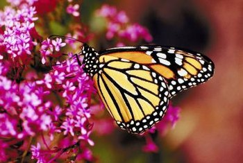 Bright colorful perennials attract butterflies.