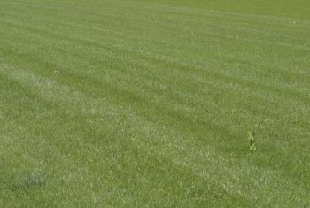 Any mower can cut a striped pattern on a lawn.