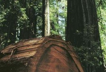 As a decking material, redwood is hard to beat, but proper sealing is vital to its durability.