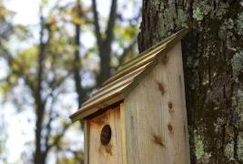 Painting your birdhouse can make it less attractive to some species.