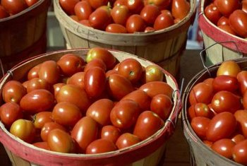 Roma tomato plants produce large crops all at once.