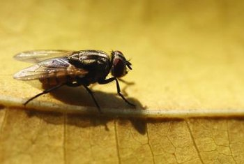 Houseflies can be repelled using natural scents they do not enjoy.