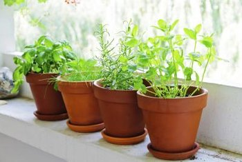 Potted herbs will grow in almost any sunny location.