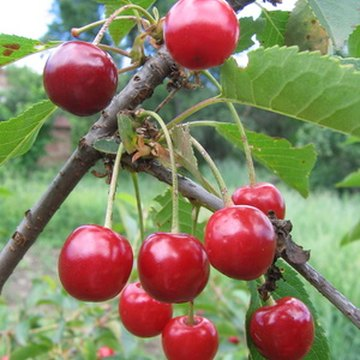 Tart cherry juice may help alleviate insomnia.