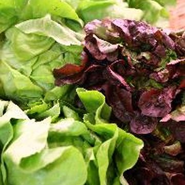 Eat more lettuce to increase your intake of essential nutrients, including fiber.