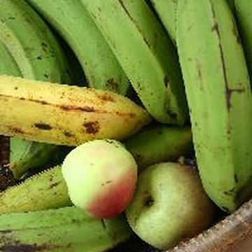 Plantains are high in carbohydrates.
