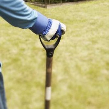 Poking holes in the lawn with a pitchfork can cause more harm than good.