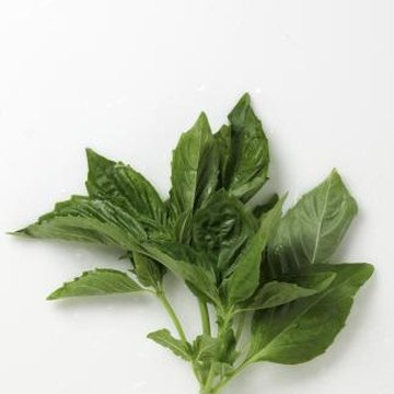 Basil stems that suddenly turn from green to brown may be cause for concern.