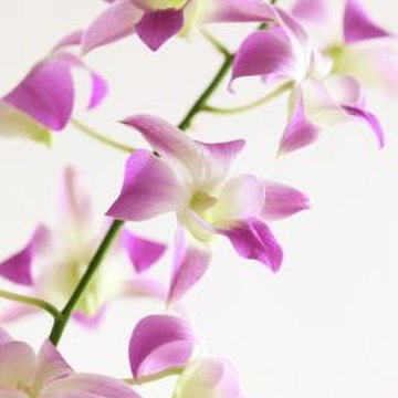 Orchids do well as houseplants.