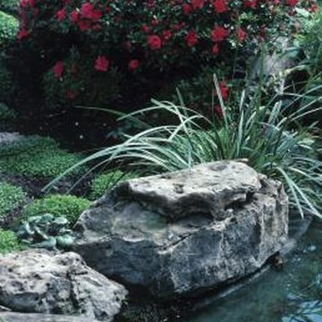 Stones give definition to garden features.