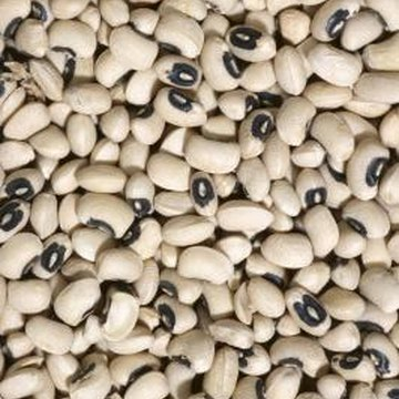 Distinctive in appearance, black-eye peas can be harvested fresh or dried.