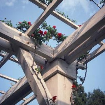 Climbing roses are one example of a flower that can be grown on a trellis.