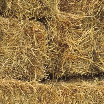 Straw bales make a good base for alternative lettuce planting methods.