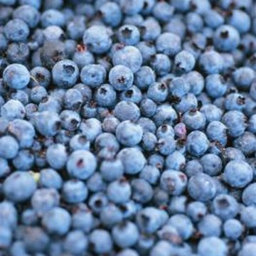 It can take several years to create the ideal soil for blueberries.