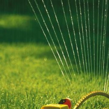 Correct watering will give you a lush new lawn.