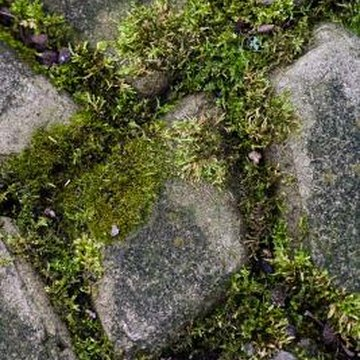 Kill moss on a path if it becomes a slipping hazard.