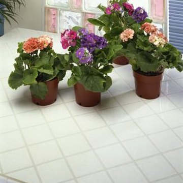 African violets are happy in a sunny north- or east-facing window.