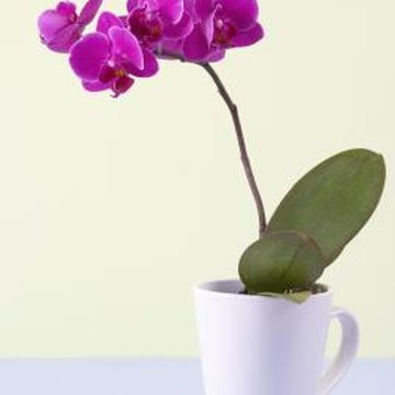 Orchids comprise the largest plant family.