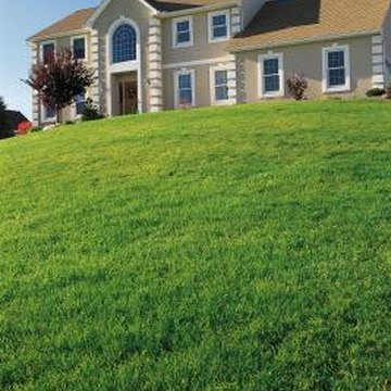 Full, thick grass improves the appearance of your entire yard.