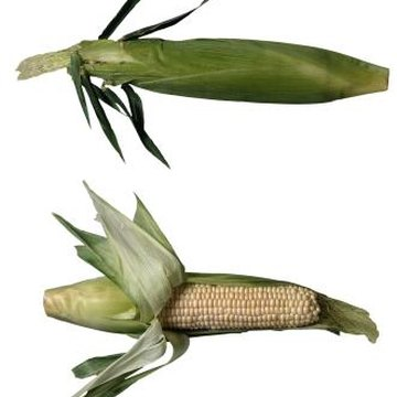 Sweet corn can grow in a confined space with the EarthBox.