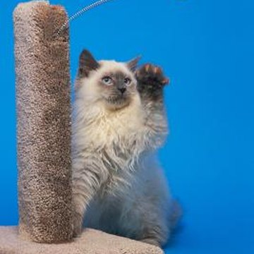 A carpeted tower can curb a cat's desire to scratch furniture.