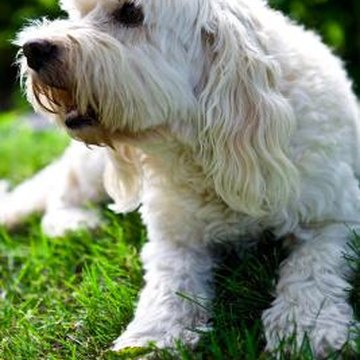 Allowing pets into your landscape increases the risks of roundworm problems.