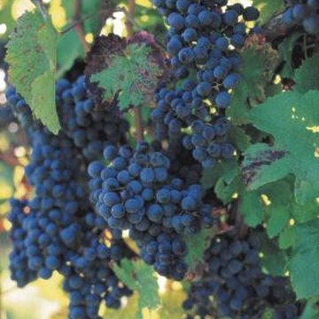Grape arbors enhance an edible garden.
