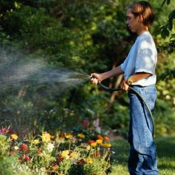 Overwatering can cause diseases that turn foliage brown and distorted.