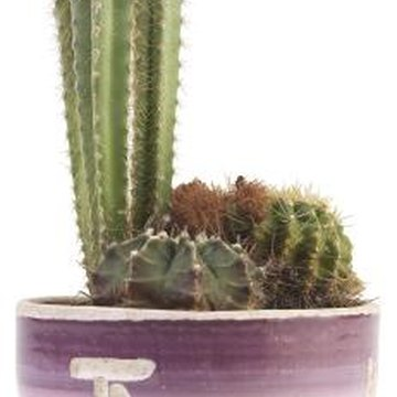 There is no need to repot a cactus that appears happy in its current pot.