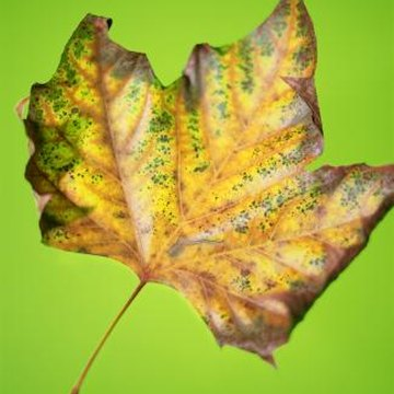 Colored leaves are symbolic of the change of seasons.