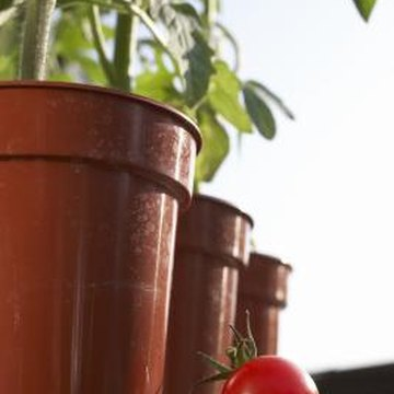 Companion planting improves health and yield of container crops, such as tomatoes.