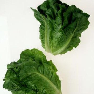 Romaine lettuce grows well in the mild weather of spring and fall.