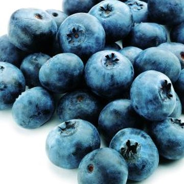 Blueberries and bilberries are hard to tell apart without cutting into the fruit.