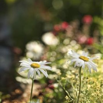 Many flower mats contain daisies and other easy-to-grow perennials.