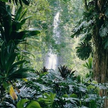 Tropical plants produce a lush cool area.