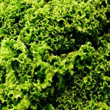 Kale is an excellent source of the blood-clotting nutrient vitamin K.