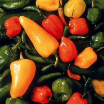 Sweet peppers remain mild, even when left to fully ripen and change color.