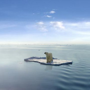 Bear on floating ice