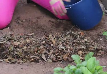 Winter Soil Preparation for Vegetable Gardening