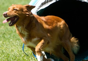 Dog Agility: A Sport for You and Your Pup