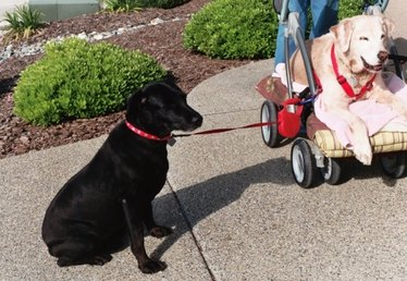 How to Walk a Dog and a Stroller
