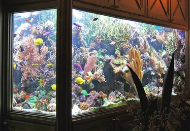How to Change Water in a Saltwater Aquarium