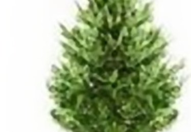 Using Borax for Cut Christmas Tree Care